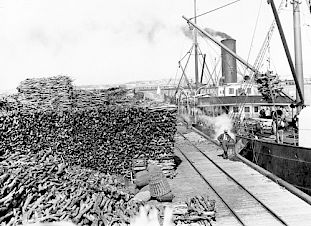 Sandalwood departs Fremantle Habor (in Western Australia) in huge quantities–much of it likely destined for China–in the early 20th century.